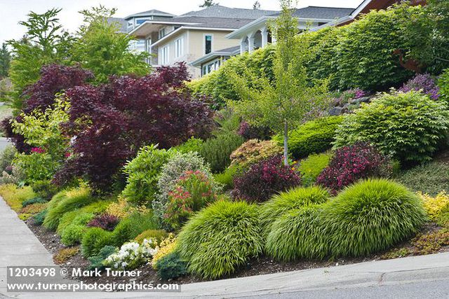 1203498 grasses shrubs small trees in front yard garden for Small bushes for landscaping