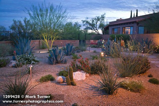 1209428 Stepping Stone Path Through Xeric Garden W/ Pricklypear Cactus,  Rush Milkweed, Agaves, Hummingbird Trumpet, ...